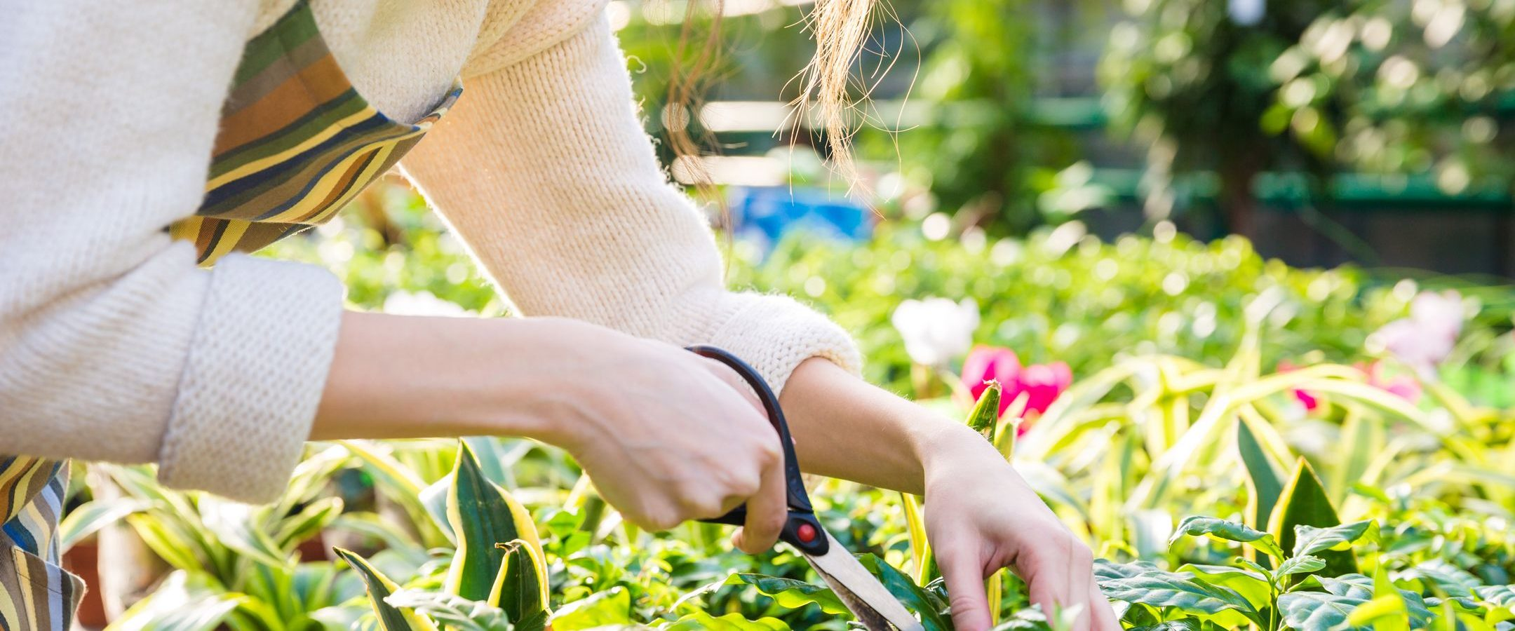 Cute young woman gardener cutting plants with garden scissors in greenhouse